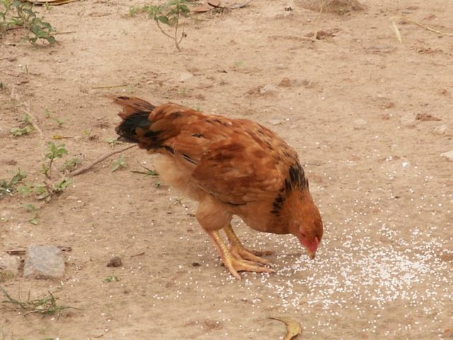 IMAG2432.JPG  Vietnams gefährlichstes Tier